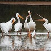 Pelicans Singing Auld Lang Syne Art Print