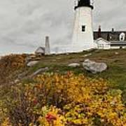 Pemaquid Point Lighthouse And Sea Roses Art Print