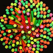 Pencil Blossom Art Print