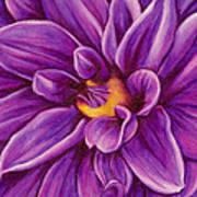 Pencil Dahlia Art Print