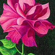 Pencil Rose Art Print