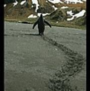 Penguin Travel Poster Art Print