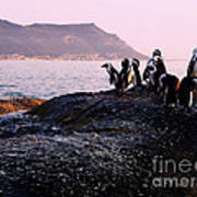 Penguins Mountain Boulders Beach Cape Town Art Print