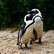 Penguins On Beach At Boulders Beach Cape Town Art Print
