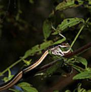 Peninsula Ribbon Snake Art Print by April Wietrecki Green