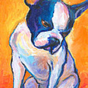 Pensive Boston Terrier Dog  Art Print