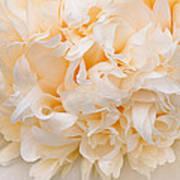 Peony Close-up In Peach Art Print