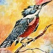 Perched Kingfisher Art Print