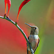 Perched On Crocosmia Art Print