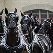 Percheron Horse Team 2008 Art Print