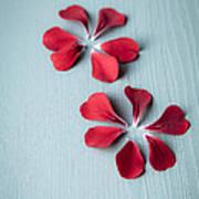 Perfect Petals Art Print