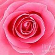 Perfect Rose Art Print