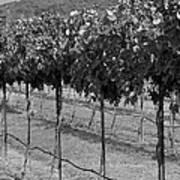 Perissos Winery Art Print
