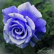 Periwinkle Rose Art Print