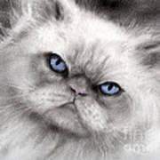 Persian Cat With Blue Eyes Art Print