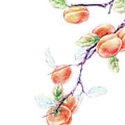 Persimmon Tree Art Print