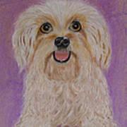 Pet Dog Art Print by David Hawkes