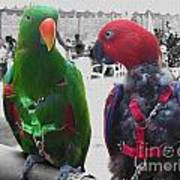 Pet Parrots In A Cafe Art Print