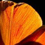 Petals And Sun Art Print