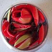 Petals In Vase  Art Print