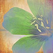 Petals Of Color Art Print