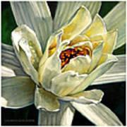 Petals Of Ivory Art Print
