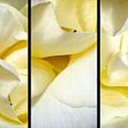 Petals Triptych Art Print