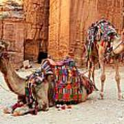 Petra Camels Art Print