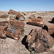 Petrified Forest Art Print