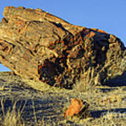 Petrified Log Art Print