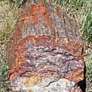 Petrified Stump Art Print