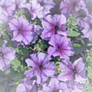 Petunia Patch Art Print