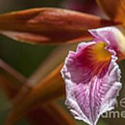 Phaius Tankervilleae Orchid Art Print by Al Andersen