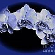 Phalaenopsis 2 Art Print