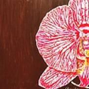 Phalaenopsis Exposed Art Print
