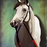 Phantom Lover Race Horce Before The Race Art Print