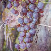 Phil's Grapes Art Print