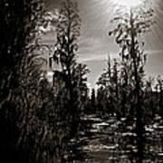 Phinizy Swamp Art Print