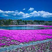 Phlox And Mt. Fuji Art Print