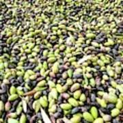 Picking Olives Art Print
