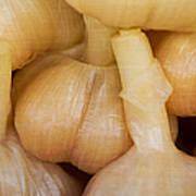 Pickled White Garlic - 1 Art Print