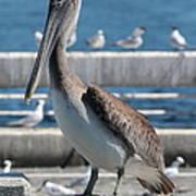 Pier Brown Pelican Art Print