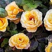 Pierre's Peach Roses Art Print
