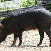 Pig - National Zoo - 01131 Art Print by DC Photographer