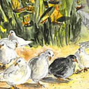 Pigeons In Benidorm Art Print
