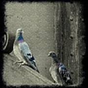 Pigeons In Damask Art Print