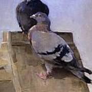 Pigeons On The Roof Art Print