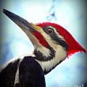 Pileated Close Up Art Print