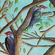 Pileated Woodpeckers Art Print
