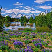 Pilgrim Creek Wildflowers Art Print